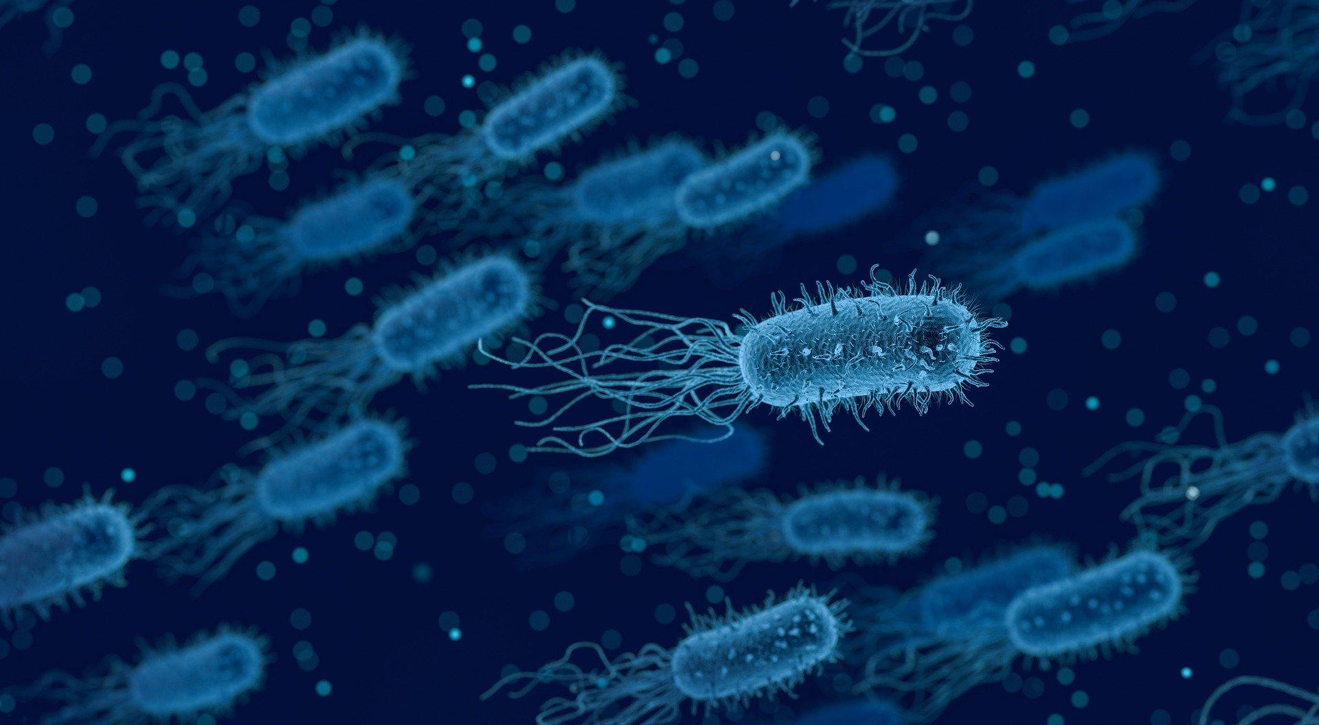 bakterie